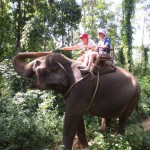 Roots of Asia – a fantastic green and mindful tour