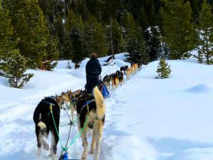 Dogsledding with Adventure women