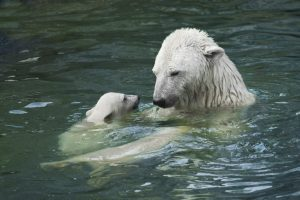 See Polar Bears with Adventure Women