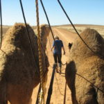 Walk with Camels