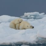 Greenland Arctic Discovery Tour – with Lyn Taylor