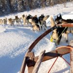 Women-Adventure-Travel-Sweden-husky